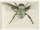 Leonard Baskin. Bee Fly. Etching from: Diptera: A Book of Flies & Other Insects. The Gehenna Press, 1983.